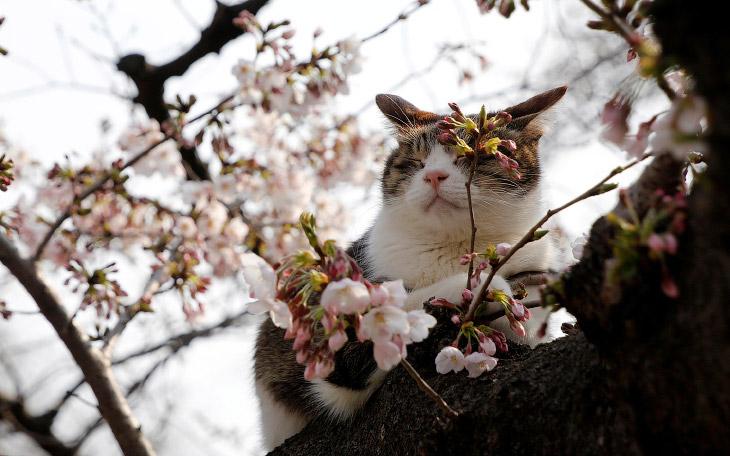 Весна идет — весне дорогу