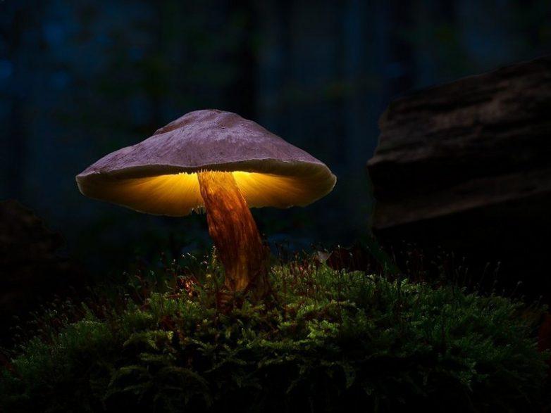 Электричество из грибов? Уже реальность!