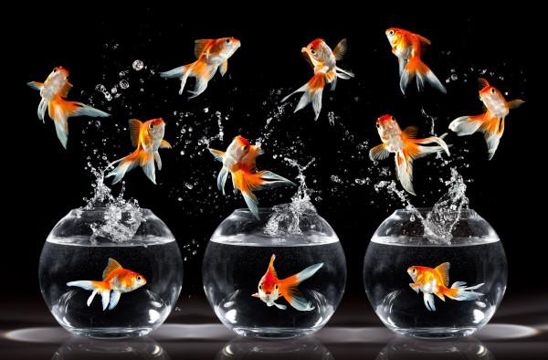 Теперь ученые знают, что просить у Золотой рыбки