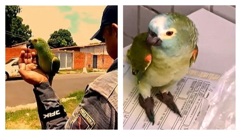"""В Бразилии задержан """"нарко-попугай"""", обученный стоять на стрёме"""