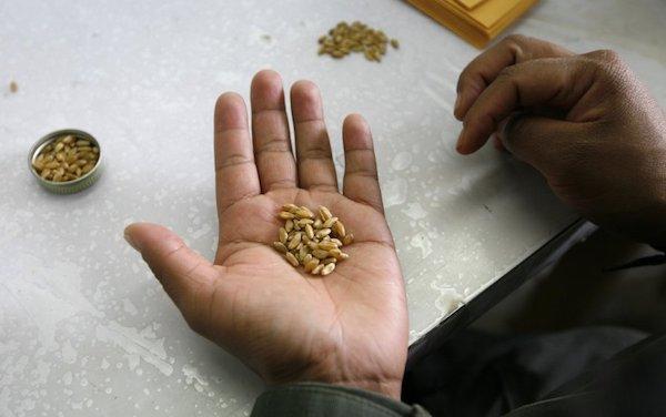 Время перебирать семена