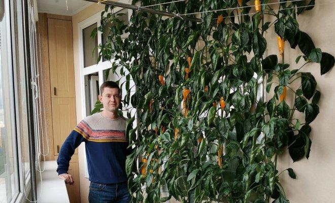 Забор из перца в московской …