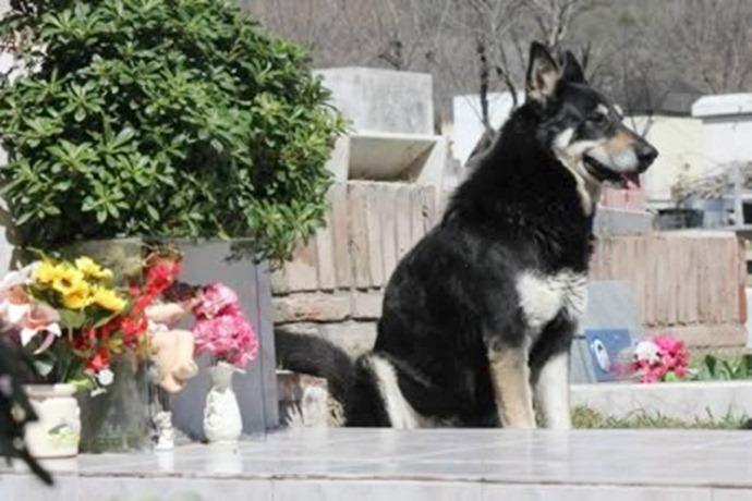 Пёс убежал из дома, чтобы найти могилу своего мёртвого хозяина, и провел рядом с ней 6 лет.