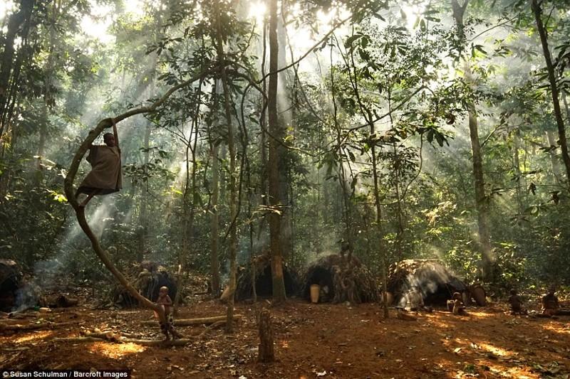 Как живут африканские пигмеи африка, пигмеи, племя, тропический лес