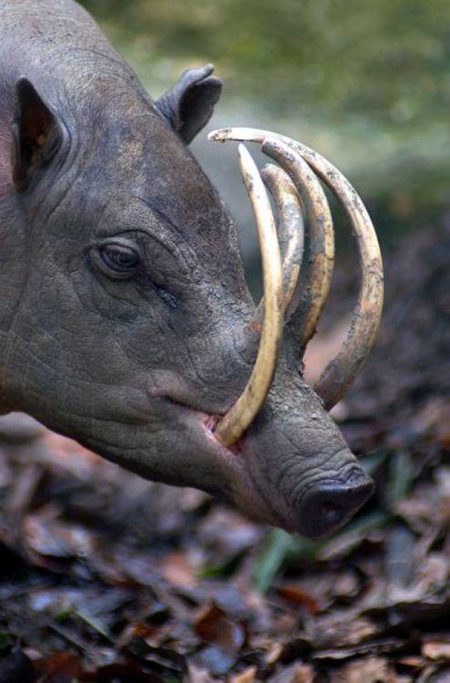 Животные, о существовании которых вы может даже и не знали