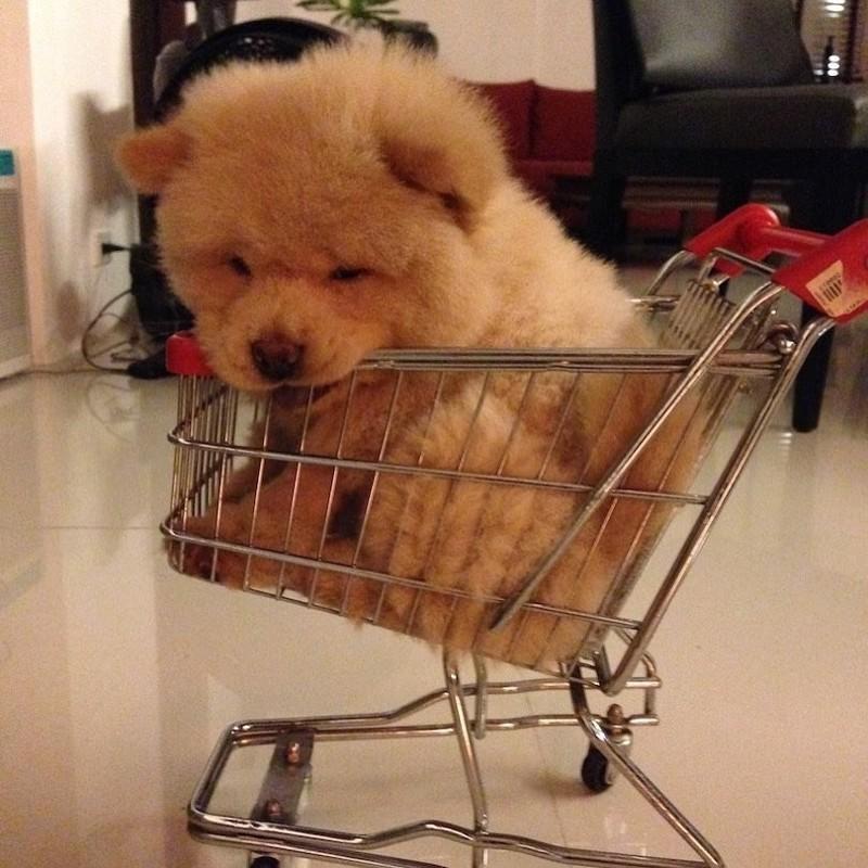 """""""Он любит, когда его обнимают"""" Instagram, животные, медведь, пес, соцсеть, сходство, филиппины, чау-чау"""