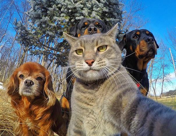 Забавные автопортреты животных