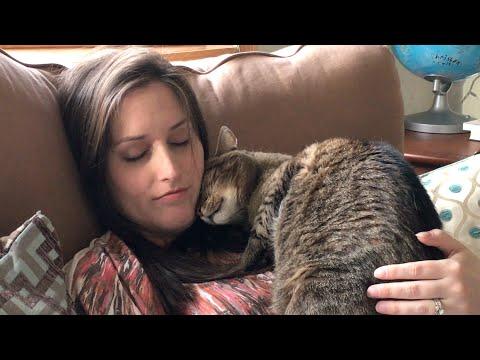 Реакция кошек на беременность хозяйки