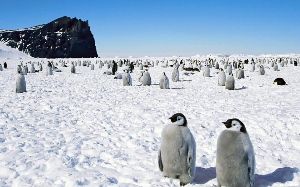 В Антарктиде нашли базу пришельцев