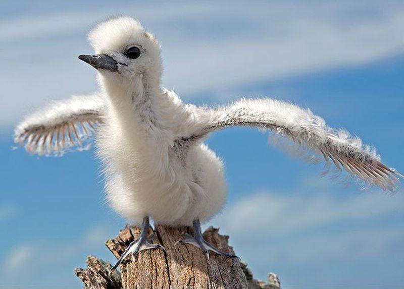 Гадкий утенок и его 40 друзей: как выглядят птенцы известных (и не очень) птиц