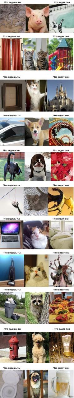 Как видят мир животные