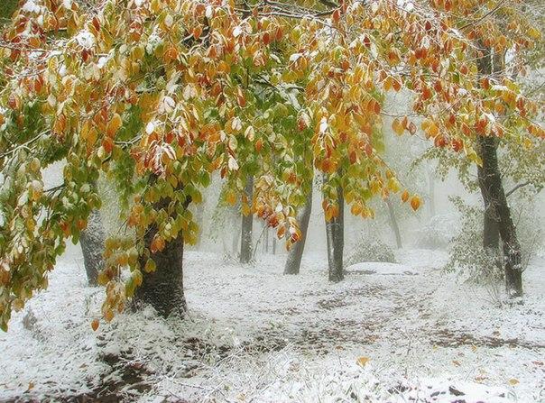 Тонкая грань между осенью и зимой