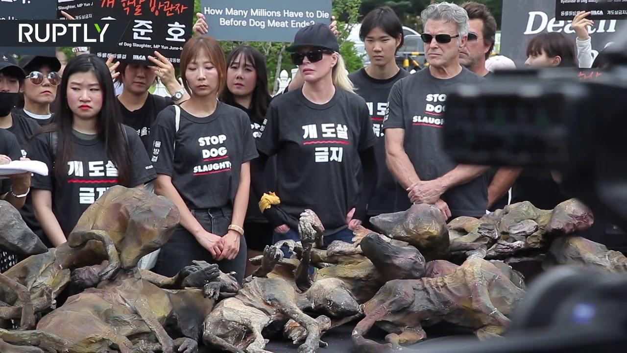 Протесты против убийства собак в Южной Корее