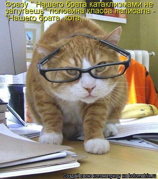 """Котоматрица: Фразу """" Нашего брата катаклизмами не запугаешь"""" половина класса написала - """"Нашего брата, кота,..."""