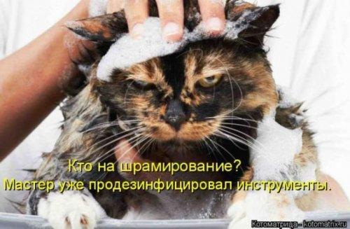 Котосмешинки