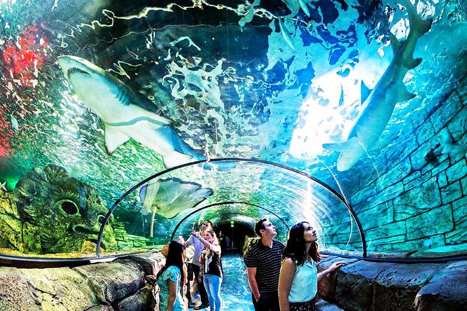 Аквариум в Сиднее Австралия. Океаны в миниатюре. Самые известные и крутые океанариумы мира. Фото с сайта NewPix.ru