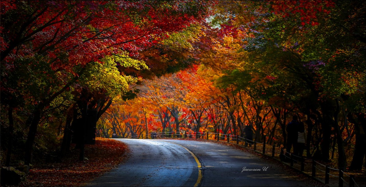Фотография Autumn Road автор Jaewoon U на 500px