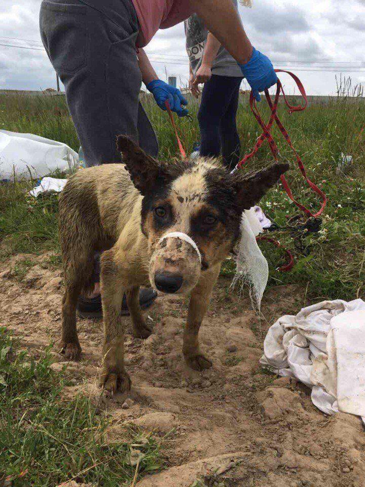 В скотомогильнике нашли живых щенков