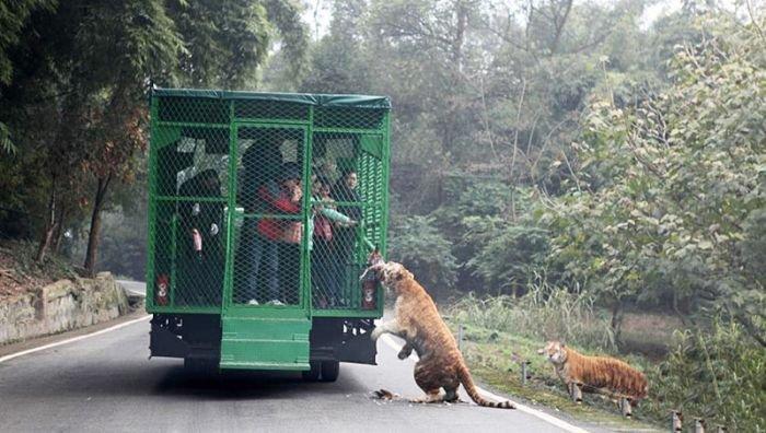 Уникальный китайский зоопарк