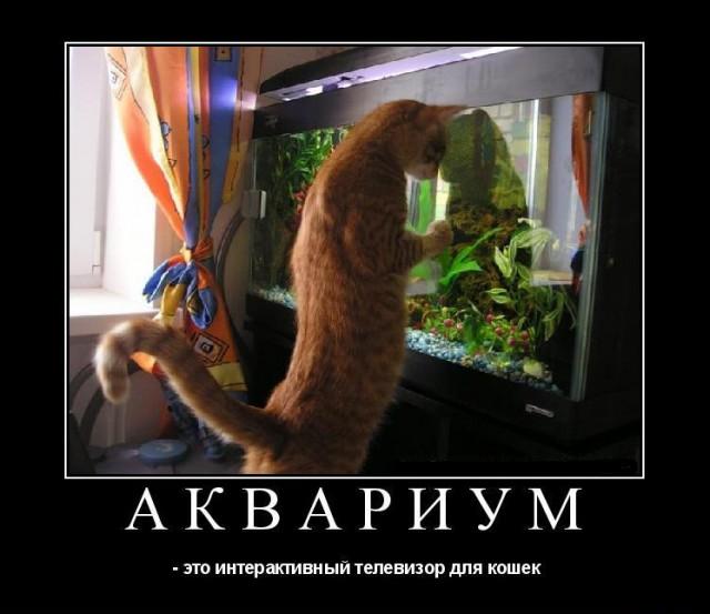 А вы знали, что аквариум – это такой специальный телевизор для кошек? - Подборка забавных фото