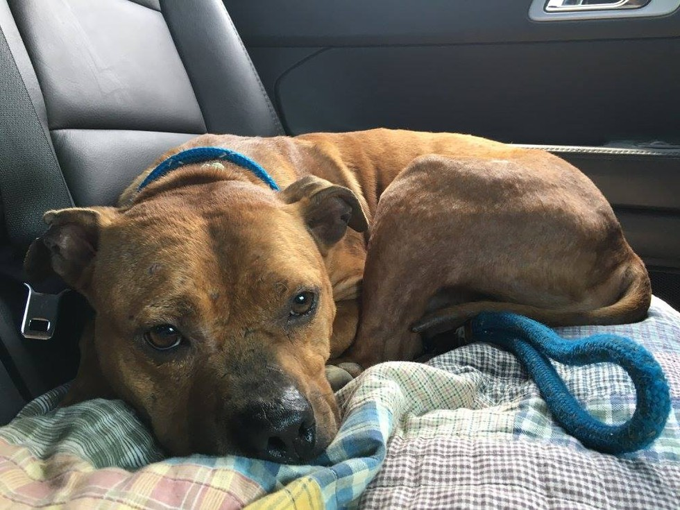 Этого пса избили и выбросили на ходу из машины. Но теперь его жизнь кардинально изменится!