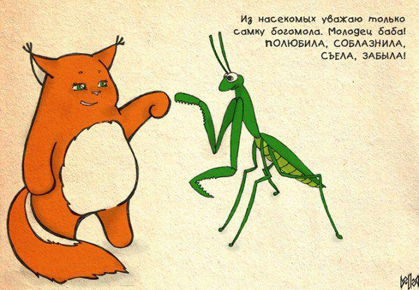 Обаятельная белка - Крошка Ши   рисунки, белки Ши