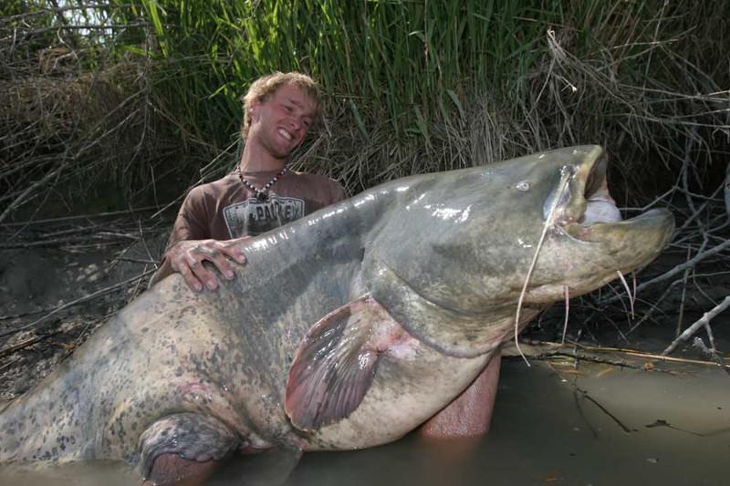 А вот такие ребята вполне могут и самого рыбака к себе в воду утащить морские монстры, рыбалка, рыбы