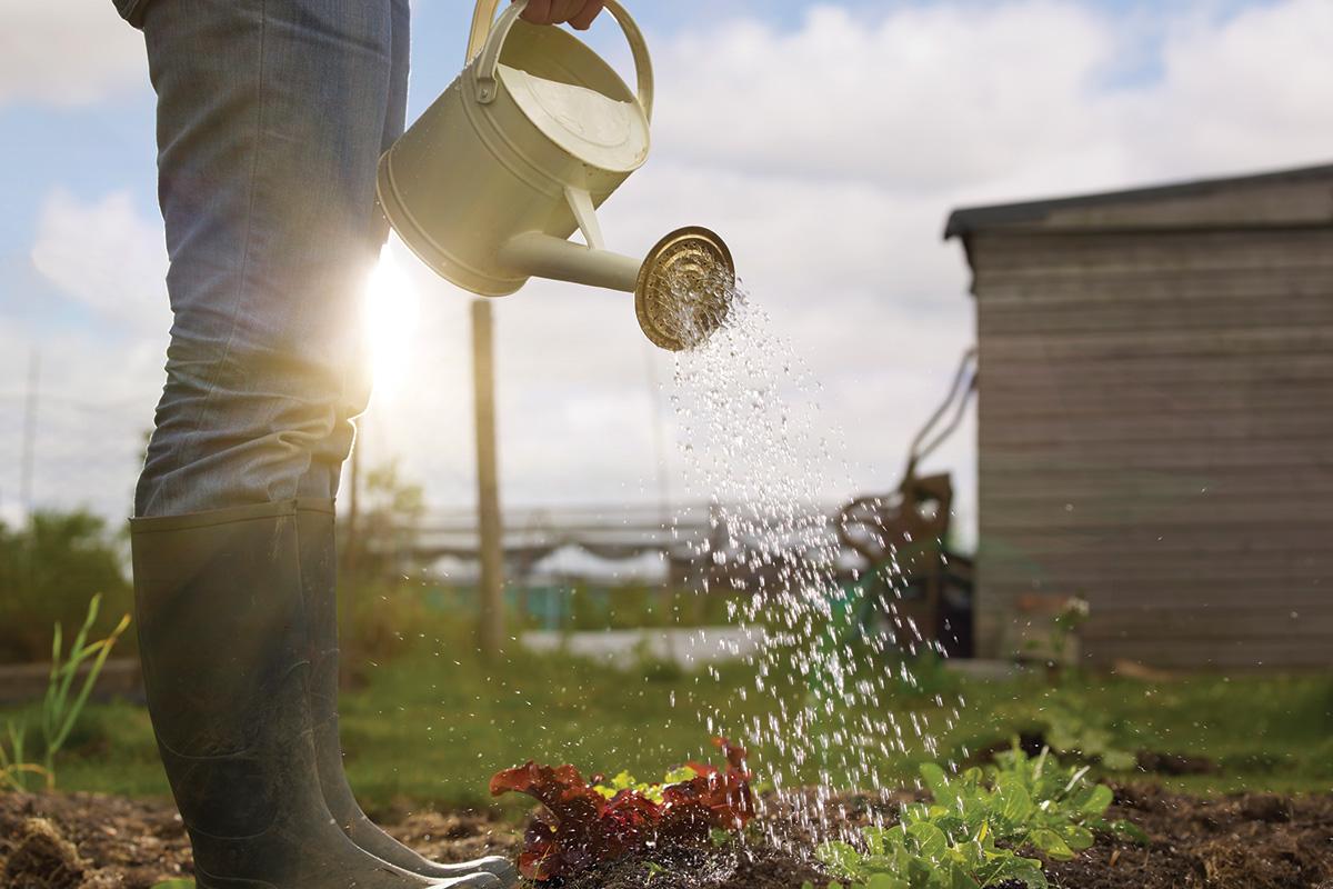 Как оздоровить почву и улучшить ее плодородие