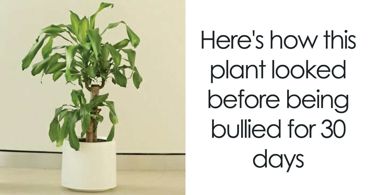 IKEA Asks People To Bully This Plant For 30 Days To See What Happens, And Results Are Eyeopening