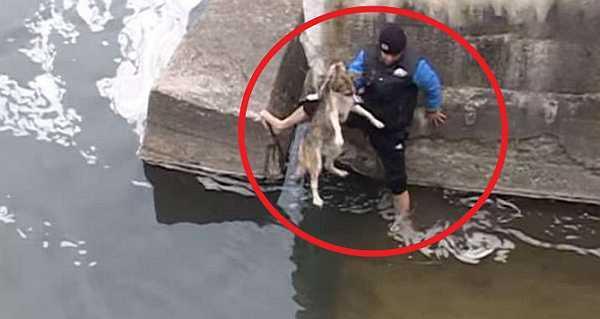 Как пес поблагодарил своего спасителя