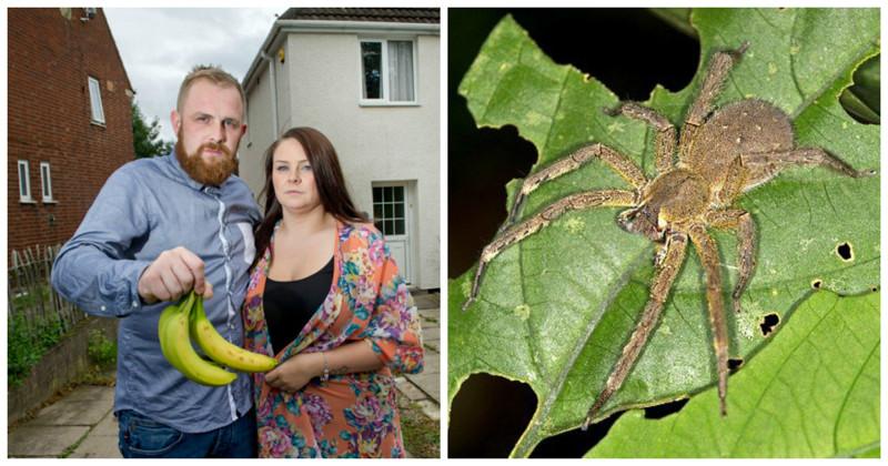 Семья сбежала из родного дома из-за пауков, вызывающих 4-часовую эрекцию