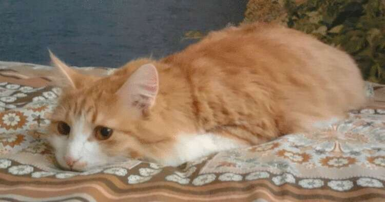 Смелый кот решил поймать уда…