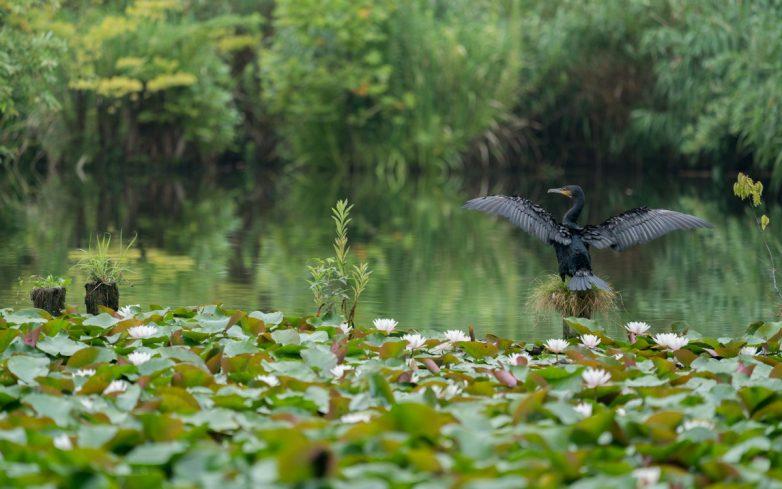 Восточный ракурс: гармония японской природы на фото