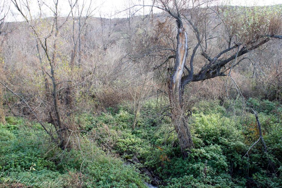 У реки около пещеры Деветашка