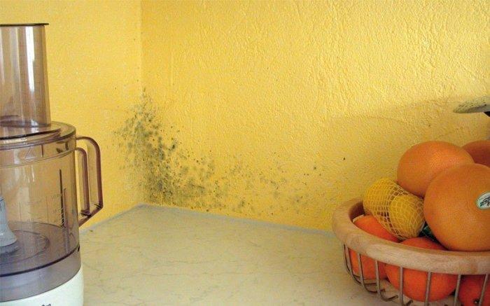 Методы борьбы с плесенью в доме