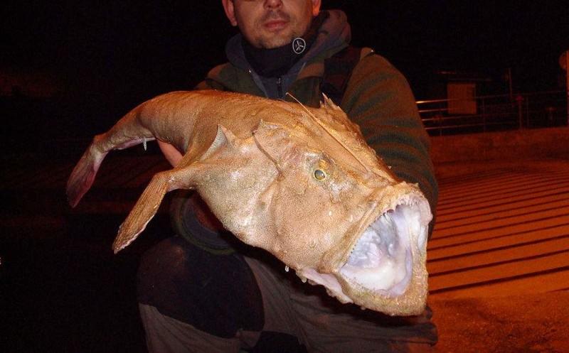 В общем, не все уловы одинаково полезны морские монстры, рыбалка, рыбы