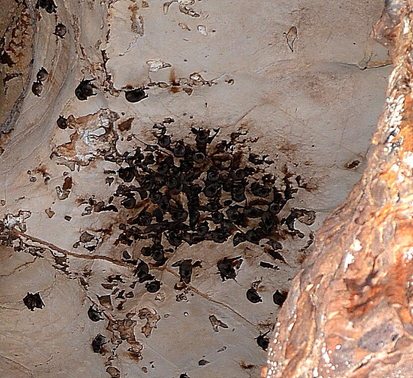 Кучка летучих мышей (фото автора)