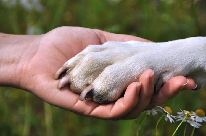 Собака — друг человека!