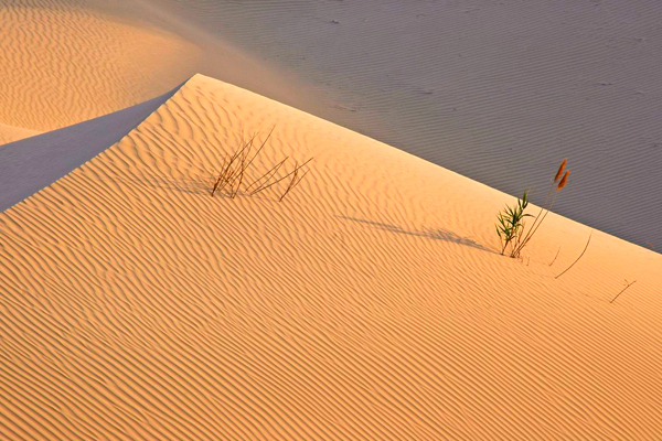 Такла-Макан: пустыня смерти (Китай)