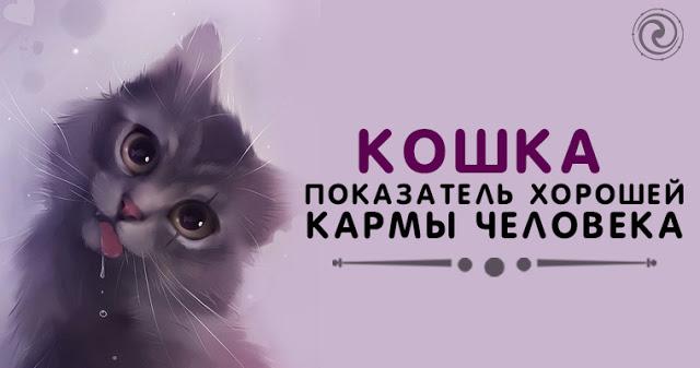 Кошка — показатель хорошей кармы человека