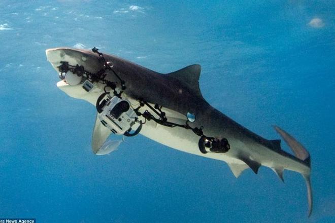 Акула отобрала камеру у дайвера. Реальное видео!