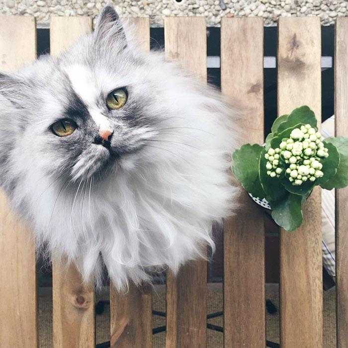Очень красивая кошка, у которой великолепный мраморный мех