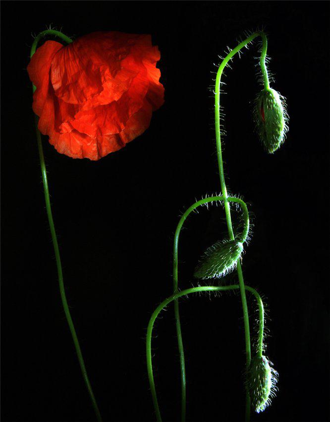 Цветочное время, фотограф Елена Еремина