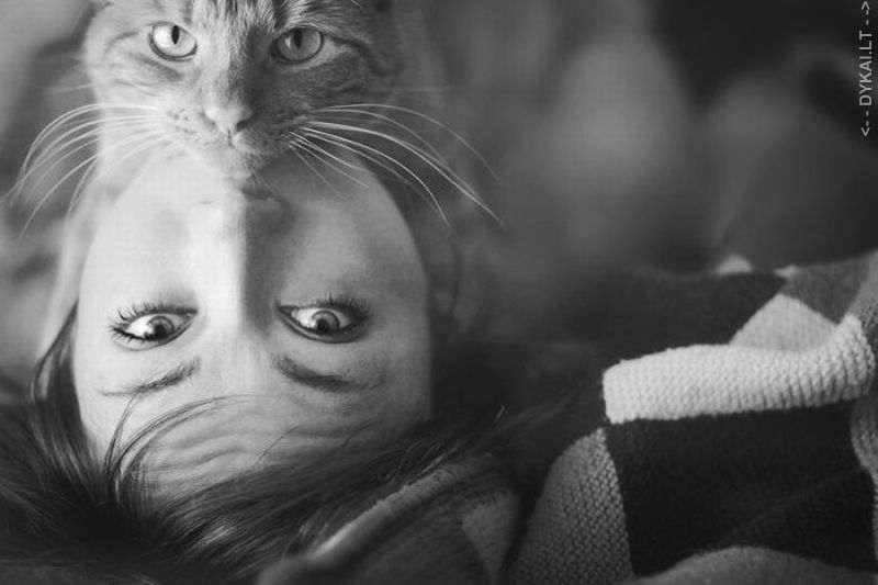 Люди, которые любят кошек (психология)