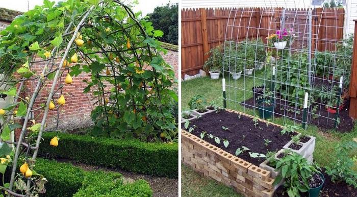 опоры для растений из сетки