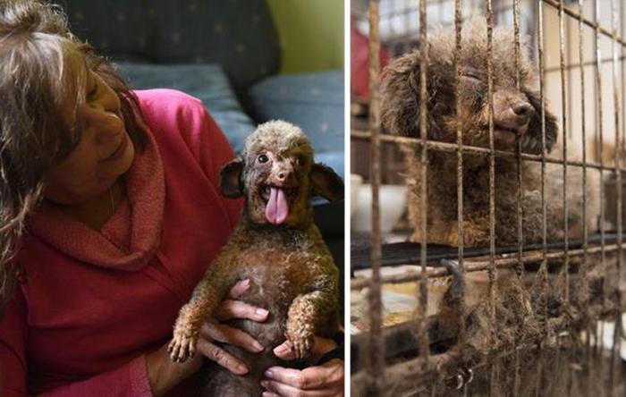 Крохотная собака всю жизнь прожила в подвале, и только сейчас поняла, что такое по-настоящему жить