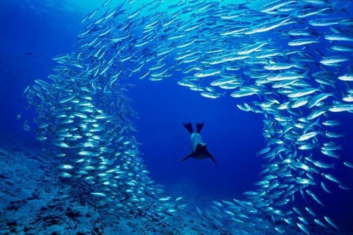 Как сделать съемку подводного мира без погружений в воду?