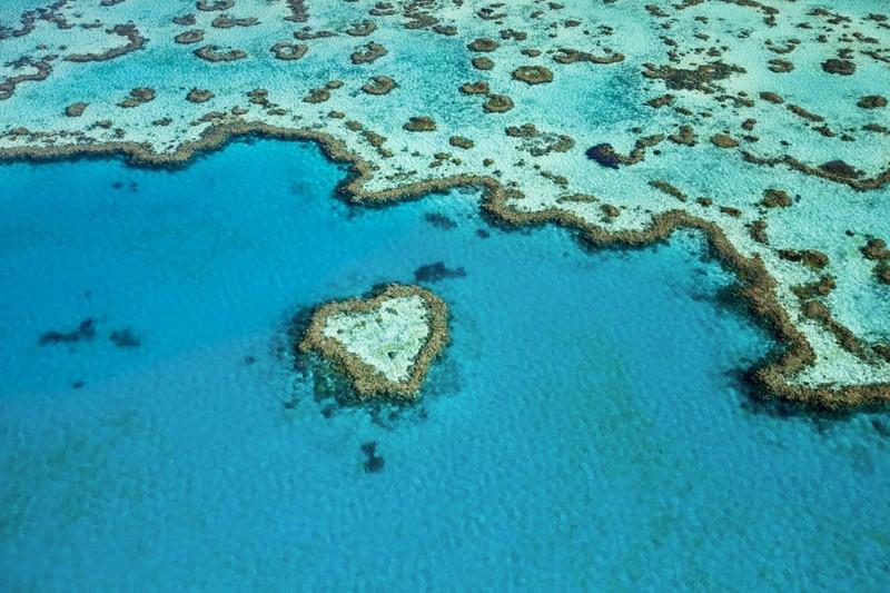 Самым большой на Земле природный объект, образованный живыми организмами - Большой Барьерный риф, 2300 км в длину австралия, доказательство, животные, мир, природа, туризм, фотография