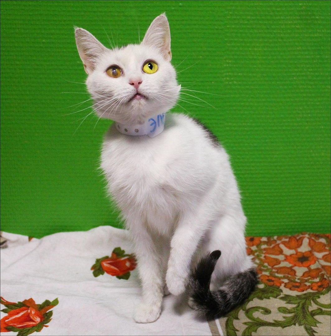 Котейка, в которой идеально всё.