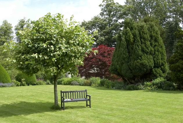 Дизайн сада из деревьев